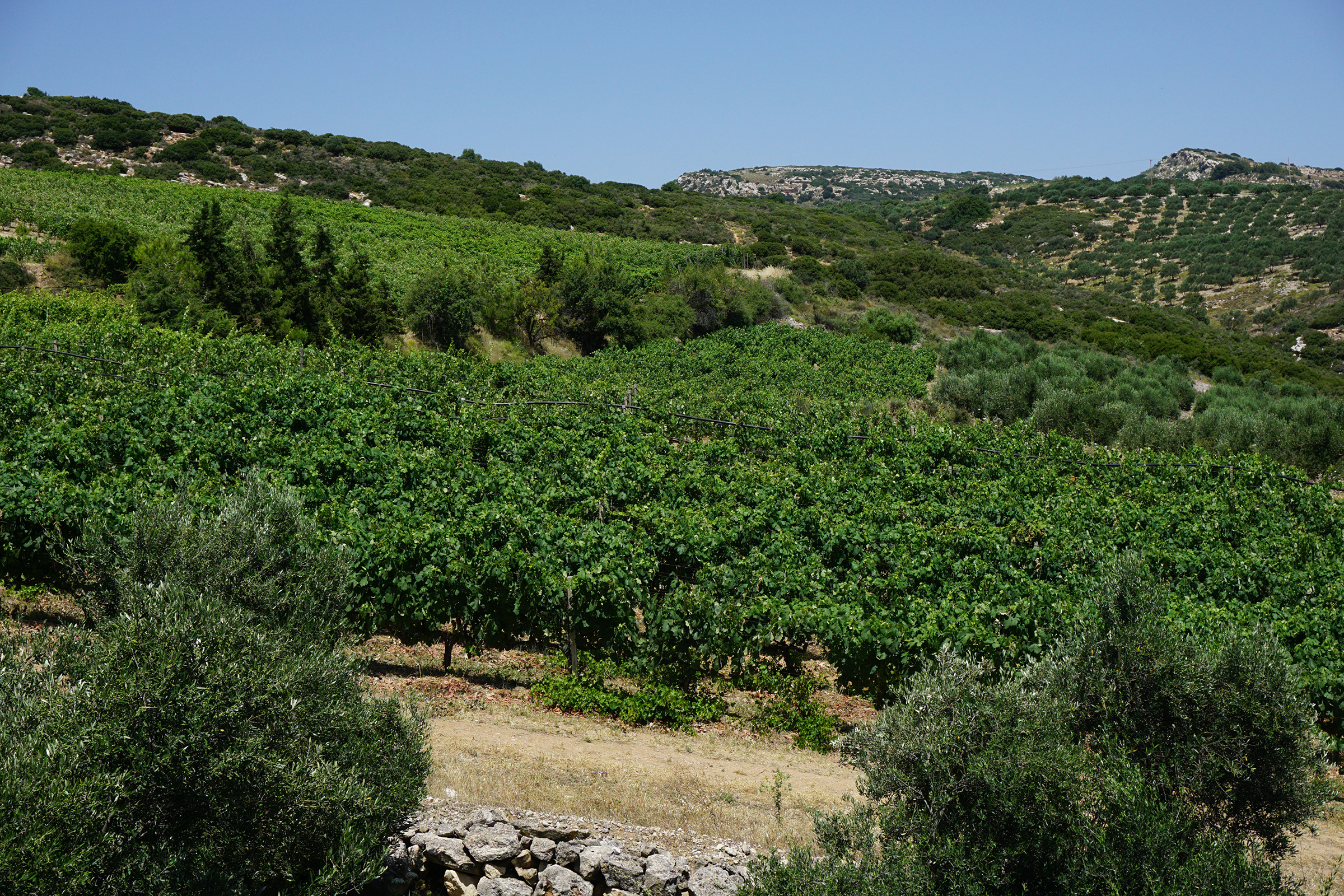 Rhous Winery Exemplifies Passion Behind Crete's Indigenous Grapes