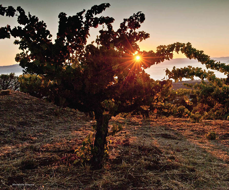 Finding the roots of Zinfandel