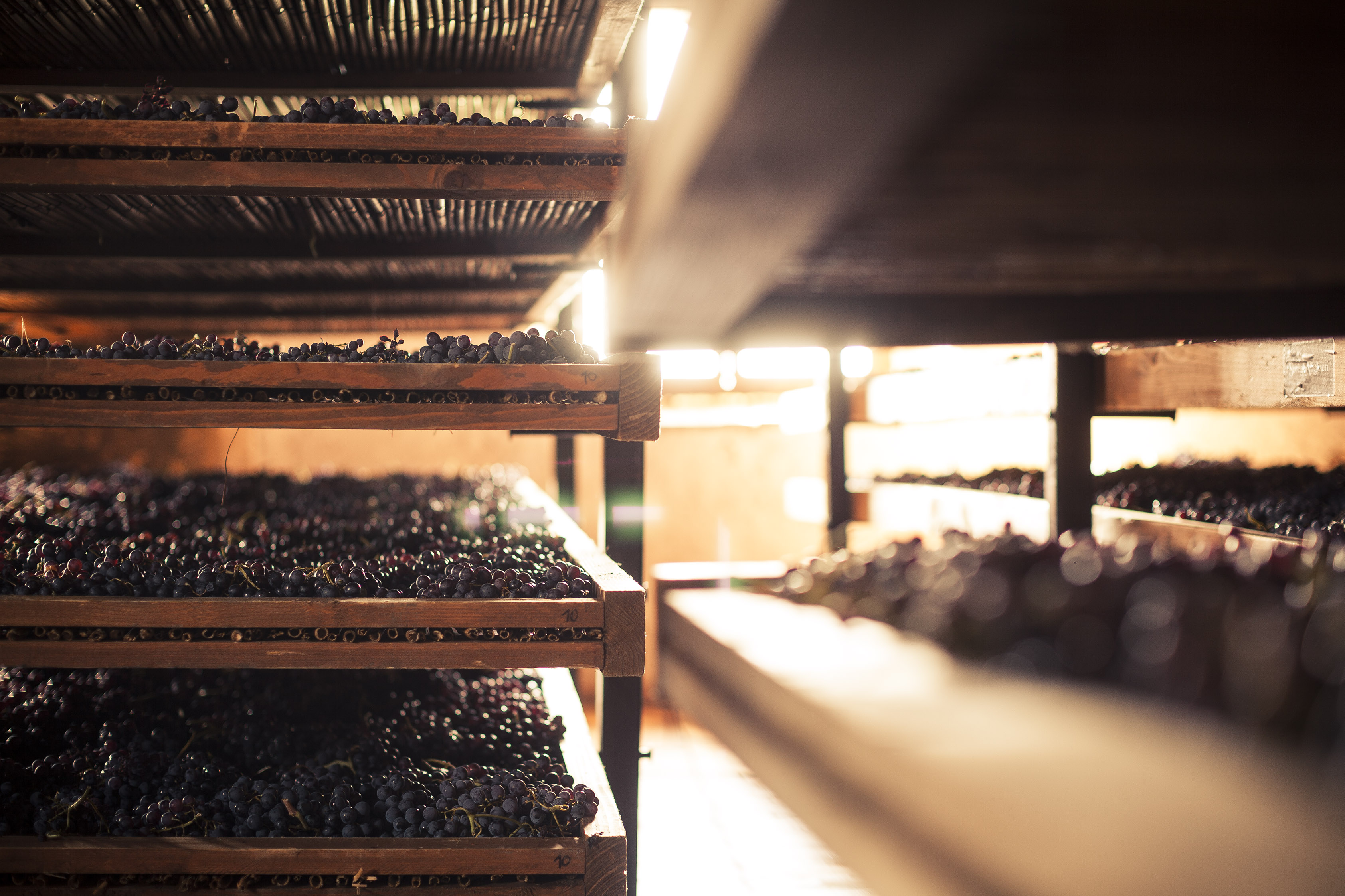 Raisin Wines of Italy