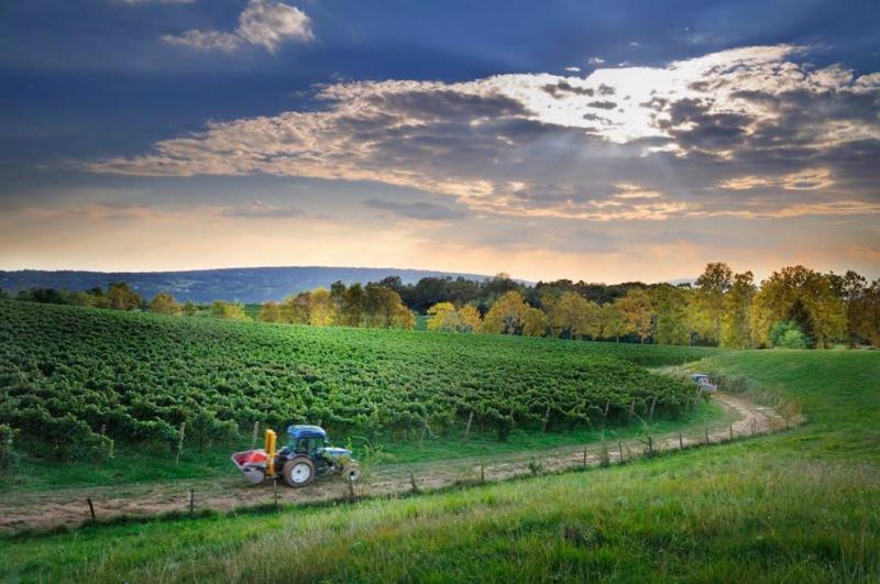 Beyond the bubbles: Borgoluce's environmental heritage