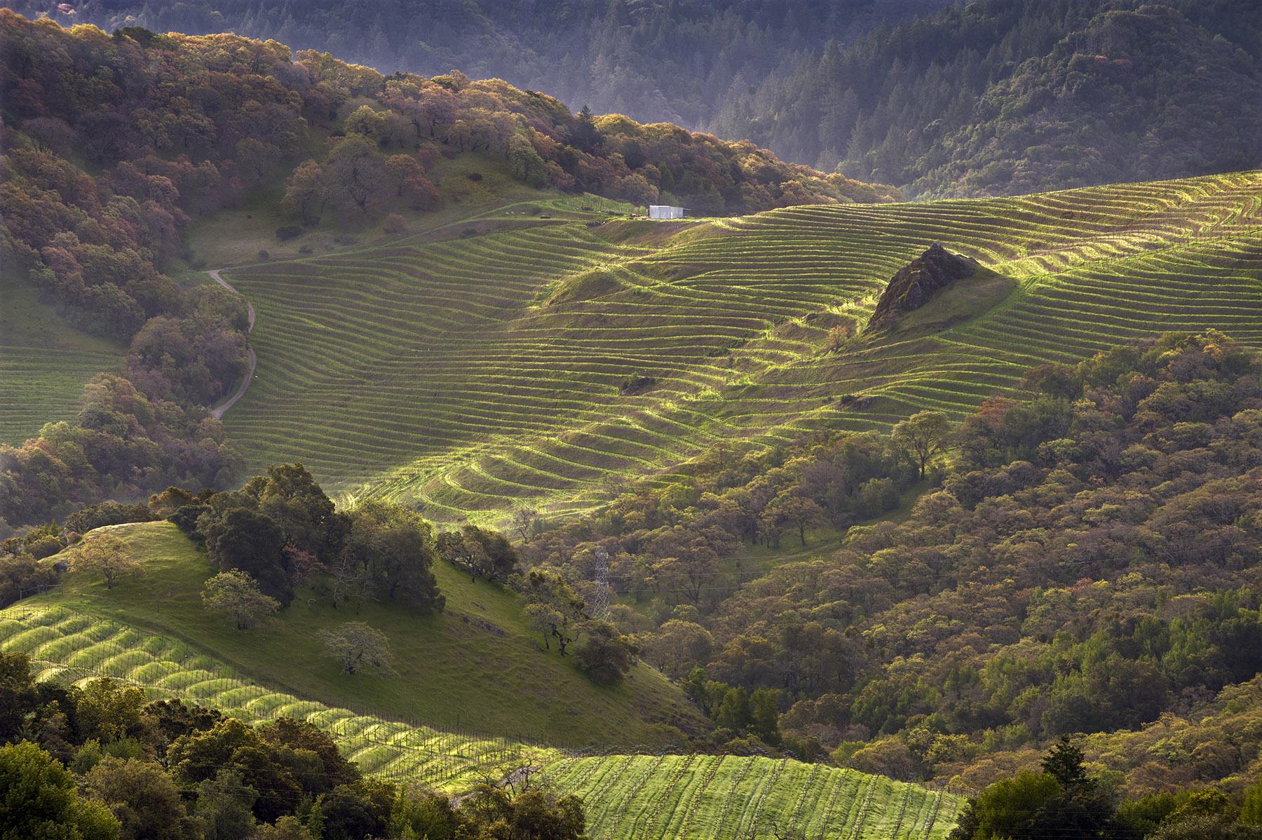 Field Study: Tasting the land at Cain Vineyard