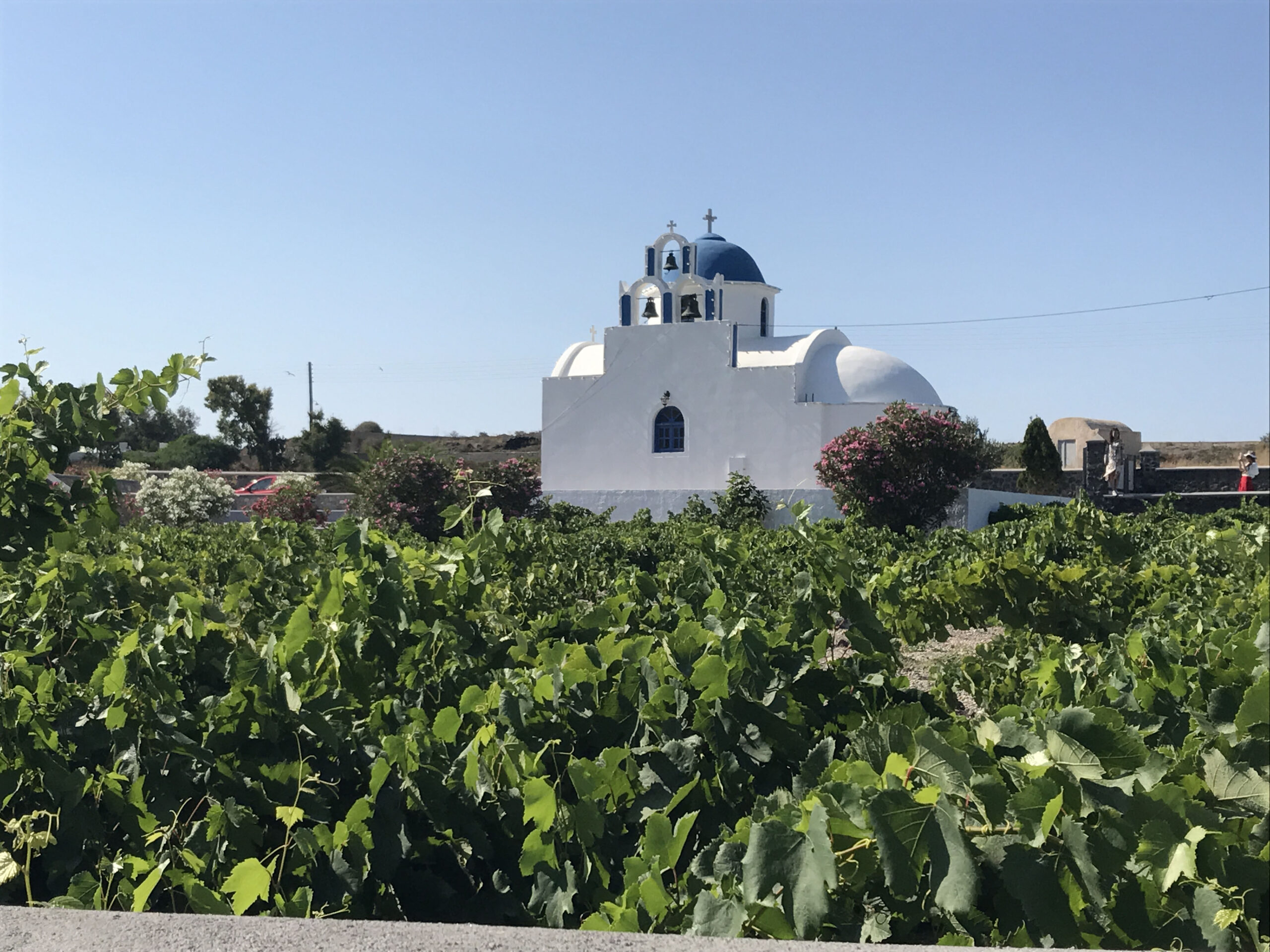 Wine Field Study:  Look down and taste Santorini